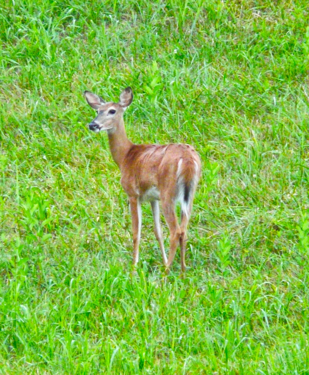 - Further on, we saw this young deer, also waiting for the sunset. - Sunset and the far-up lens -- Panasonic DMC-FZ18 - Tony Karp, design, art, photography, techno-impressionist, techno-impressionism, aerial photography , drone , drones , dji , mavic pro , video , 3D printing - Books -