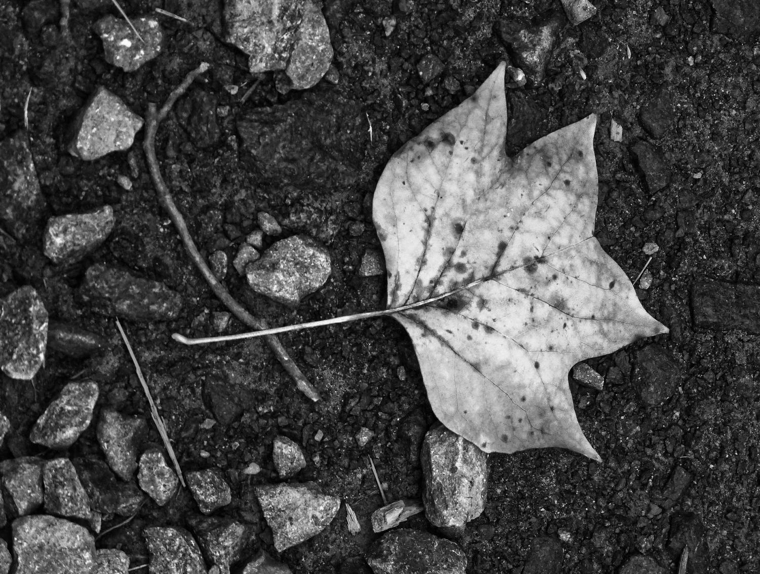 - A leaf on the road - Panasonic DMC-FZ28 - Tony Karp, design, art, photography, techno-impressionist, techno-impressionism, aerial photography , drone , drones , dji , mavic pro , video , 3D printing - Books -