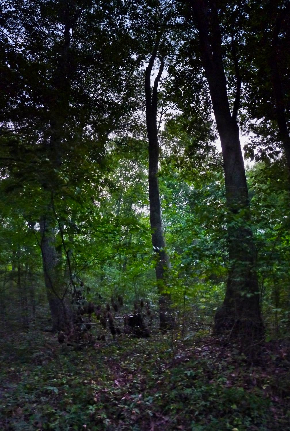 - Vertical panorama of trees at night. - Panasonic DMC-FZ35 - Tony Karp, design, art, photography, techno-impressionist, techno-impressionism, aerial photography , drone , drones , dji , mavic pro , video , 3D printing - Books -