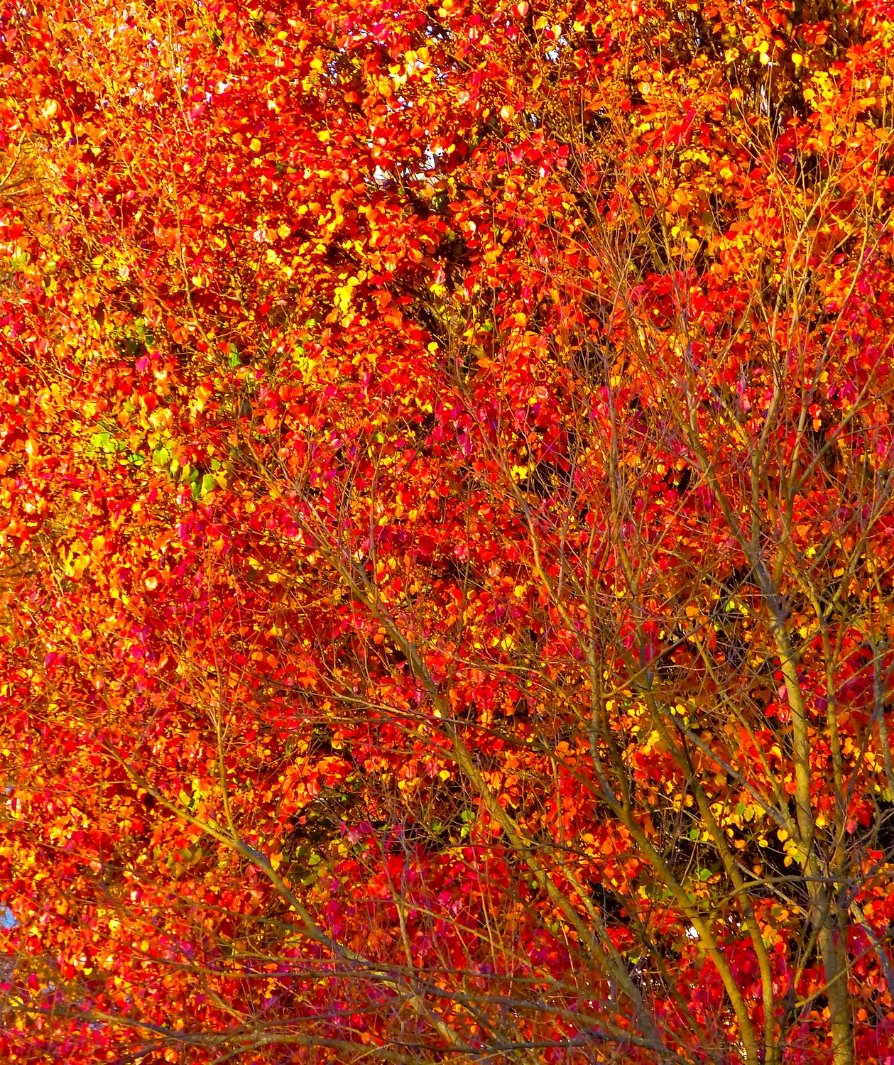 - The color of autumn <br>--- Click to see ORIGINAL --- -  Panasonic DMC-FZ150 - Tony Karp, design, art, photography, techno-impressionist, techno-impressionism, aerial photography , drone , drones , dji , mavic pro , video , 3D printing - Books -