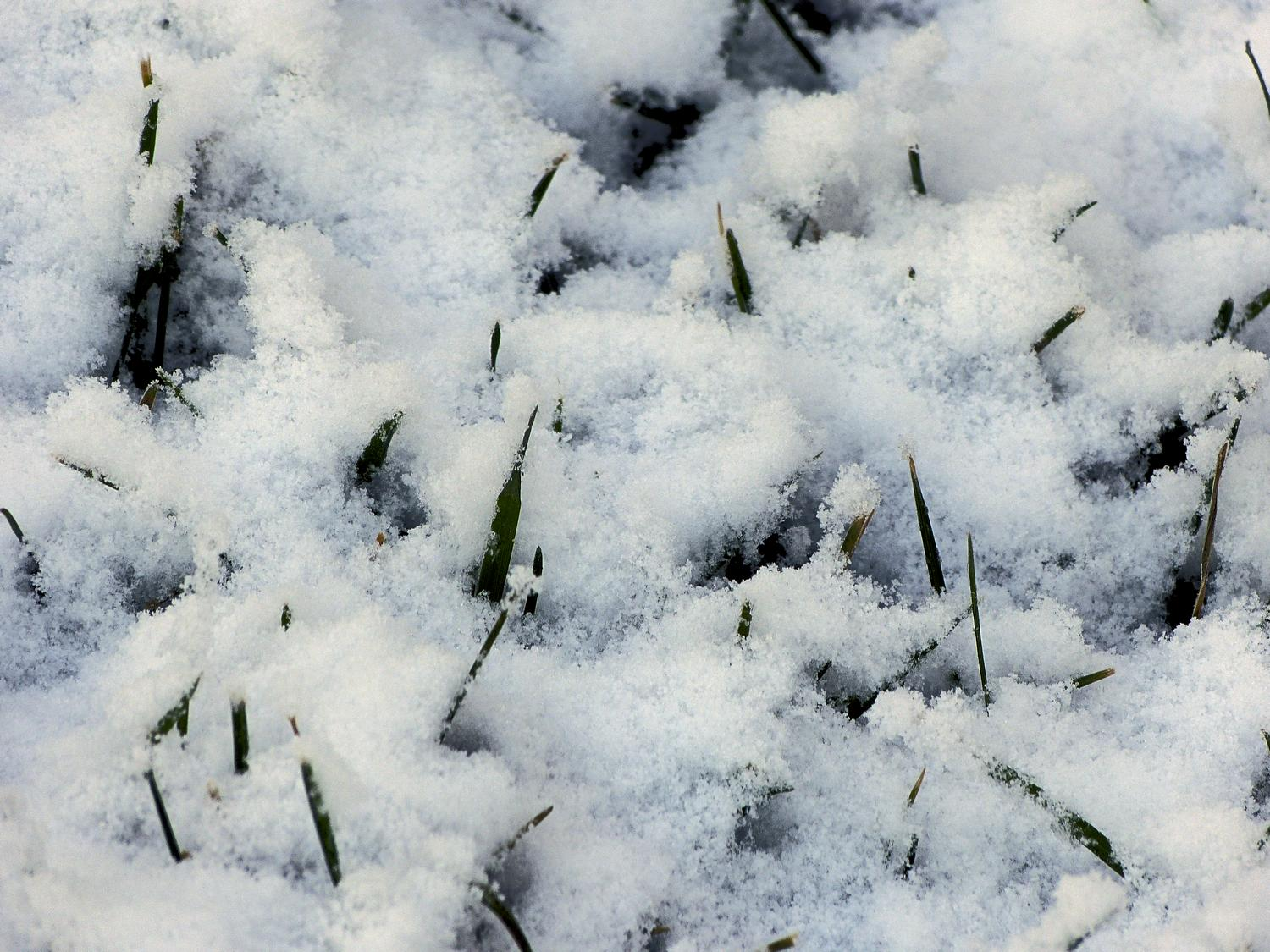 - Grass through the snow on a cool winter's morning <br>--- Click to see ORIGINAL --- - -  Panasonic DMC-FZ150 - post processing - Tony Karp, design, art, photography, techno-impressionist, techno-impressionism, aerial photography , drone , drones , dji , mavic pro , video , 3D printing - Books -
